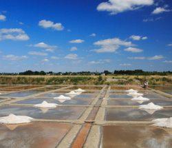 La Falaise Campsite: Guerande salt marshes 7