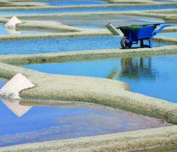 La Falaise Campsite: Salt Marshes