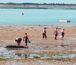 Campingplatz De La Falaise: Strandfischen